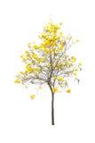 Δέντρα που απομονώνονται με το άσπρο υπόβαθρο Στοκ φωτογραφίες με δικαίωμα ελεύθερης χρήσης