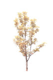 Δέντρα που απομονώνονται με το άσπρο υπόβαθρο Στοκ εικόνες με δικαίωμα ελεύθερης χρήσης