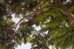 Δέντρα που απομονώνονται ψηλά στο υπόβαθρο μπλε ουρανού στοκ εικόνες