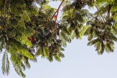 Δέντρα που απομονώνονται ψηλά στο υπόβαθρο μπλε ουρανού στοκ εικόνα με δικαίωμα ελεύθερης χρήσης