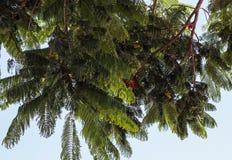 Δέντρα που απομονώνονται ψηλά στο υπόβαθρο μπλε ουρανού στοκ εικόνα
