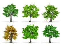 Δέντρα που απομονώνονται στοκ εικόνες