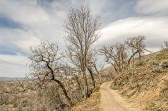 Δέντρα που αυξάνονται στις περίεργες κατευθύνσεις σε αυτό το ίχνος στοκ εικόνα με δικαίωμα ελεύθερης χρήσης