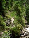 Δέντρα που αυξάνονται στους βράχους ι Στοκ Εικόνες