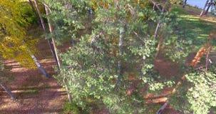 Δέντρα που αφαιρούνται δασικά από το quadrocopter φιλμ μικρού μήκους