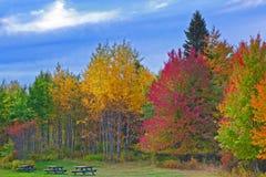 Δέντρα που αλλάζουν τα χρώματα κατά τη διάρκεια του φθινοπώρου Στοκ Εικόνες