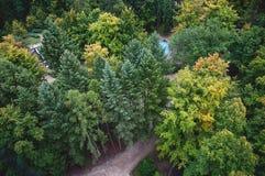 Δέντρα που βλέπουν άνωθεν στοκ εικόνες
