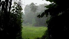 Δέντρα που βρέχονται και φυσώντας στον αέρα μιας τροπικής θύελλας βροχής στη βόρεια Ταϊλάνδη, Νοτιοανατολική Ασία, κατά τη διάρκε απόθεμα βίντεο
