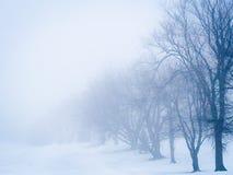 Δέντρα που εξασθενίζουν στην ομίχλη στοκ εικόνα