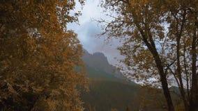 Δέντρα που καλύπτονται με τα κίτρινα φύλλα φθινοπώρου με τα βουνά στο υπόβαθρο απόθεμα βίντεο