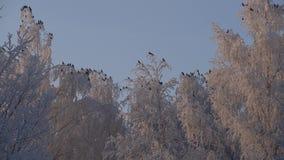 Δέντρα που καλύπτονται με το χαμηλό πυροβολισμό γωνίας παγετού απόθεμα βίντεο