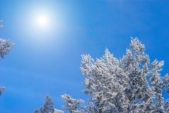 Δέντρα που καλύπτονται με το hoarfrost και το χιόνι Στοκ Φωτογραφία