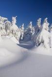 Δέντρα που καλύπτονται κωνοφόρα με το χιόνι Στοκ Εικόνες