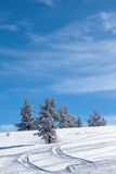 Δέντρα που καλύπτονται μερικώς με το χιόνι, Στοκ εικόνα με δικαίωμα ελεύθερης χρήσης