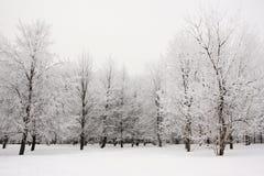 Δέντρα που καλύπτονται με τον παγετό στο χειμερινό πάρκο Στοκ Φωτογραφία