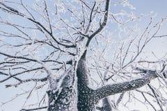 Δέντρα που καλύπτονται με τον παγετό Στοκ Φωτογραφία
