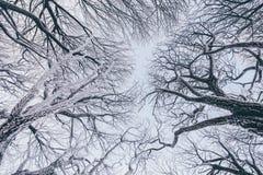 Δέντρα που καλύπτονται με τον παγετό Στοκ Εικόνες