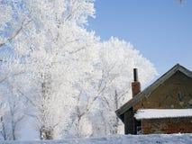 Δέντρα που καλύπτονται με το λούστρο Στοκ εικόνα με δικαίωμα ελεύθερης χρήσης