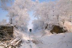 Δέντρα που καλύπτονται με το λούστρο Στοκ εικόνες με δικαίωμα ελεύθερης χρήσης
