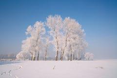 Δέντρα που καλύπτονται με το λούστρο Στοκ Φωτογραφία