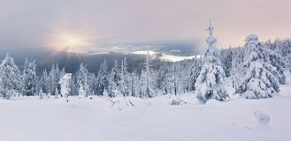 Δέντρα που καλύπτονται με το hoarfrost και το χιόνι Στοκ εικόνα με δικαίωμα ελεύθερης χρήσης