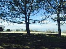 Δέντρα που πετούν τις σκιές Στοκ Εικόνες