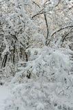 Δέντρα που ρυπαίνονται με το φρέσκο χιόνι στοκ φωτογραφίες