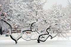 δέντρα που στρίβονται Στοκ φωτογραφία με δικαίωμα ελεύθερης χρήσης