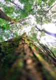 Δέντρα που συνδέονται στοκ εικόνα