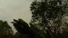 Δέντρα που ταλαντεύονται στο ισχυρό άνεμο της θύελλας βροχής σε θερινή περίοδο απόθεμα βίντεο