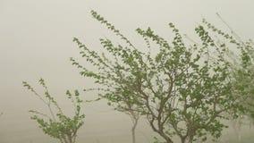Δέντρα που φυσούν σε μια θύελλα σκόνης στο Ουζμπεκιστάν φιλμ μικρού μήκους