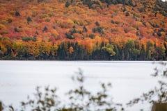 Δέντρα πτώσης το φθινόπωρο Algonquin Στοκ φωτογραφίες με δικαίωμα ελεύθερης χρήσης