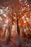 δέντρα πτώσης Στοκ εικόνες με δικαίωμα ελεύθερης χρήσης