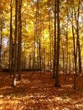 Δέντρα πτώσης Στοκ φωτογραφία με δικαίωμα ελεύθερης χρήσης