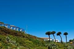 Δέντρα δράκων στο νησί του Λα Palma στοκ εικόνα με δικαίωμα ελεύθερης χρήσης