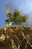δέντρα ριζών Στοκ φωτογραφίες με δικαίωμα ελεύθερης χρήσης