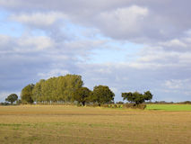 δέντρα σειρών λευκών Στοκ φωτογραφία με δικαίωμα ελεύθερης χρήσης