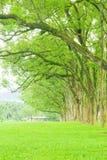 δέντρα σειρών λιβαδιών ευ&rh Στοκ Εικόνα