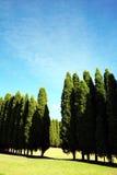 δέντρα σειρών πεύκων Στοκ Εικόνα