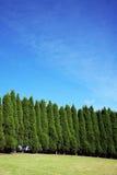 δέντρα σειρών πεύκων Στοκ φωτογραφία με δικαίωμα ελεύθερης χρήσης