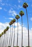 δέντρα σειρών φοινικών Στοκ Εικόνα