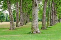 δέντρα σειρών Στοκ Εικόνες