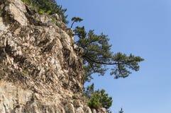 Δέντρα σε έναν απότομο βράχο Στοκ Εικόνα