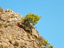 Δέντρα σε έναν βράχο Στοκ εικόνες με δικαίωμα ελεύθερης χρήσης