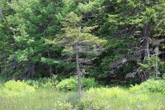 Δέντρα σε έναν τομέα του Forrest Στοκ φωτογραφία με δικαίωμα ελεύθερης χρήσης