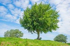Δέντρα σε έναν τομέα το καλοκαίρι Στοκ φωτογραφία με δικαίωμα ελεύθερης χρήσης