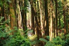 Δέντρα σε ένα δάσος Στοκ Εικόνες
