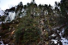 Δέντρα σε ένα βουνό Στοκ Φωτογραφία