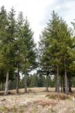 Δέντρα σε ένα δάσος που διαμορφώνει ένα φυσικό ίχνος πεζοπορίας στοκ φωτογραφία με δικαίωμα ελεύθερης χρήσης