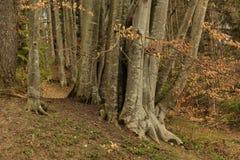 Δέντρα σε ένα δάσος Στοκ φωτογραφία με δικαίωμα ελεύθερης χρήσης